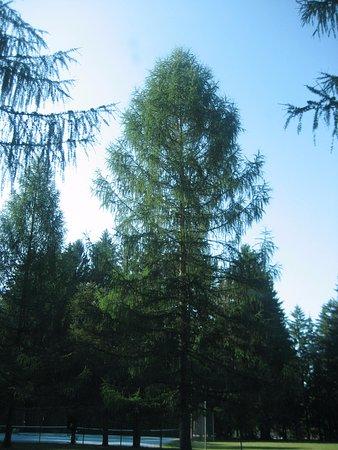 Owen Sound, Canada: tree in Campground
