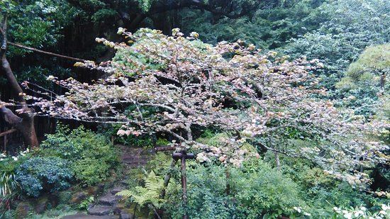 Hokokuji Temple (Takedera Temple): anonymous tree