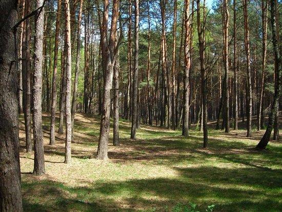 Krasnoturansk, روسيا: Краснотуранский бор