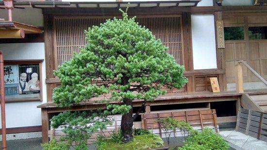 Hokokuji Temple (Takedera Temple): Bonsai