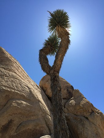 Twentynine Palms, CA: Taken at the trailhead at opne of the mountain hikes in the Park