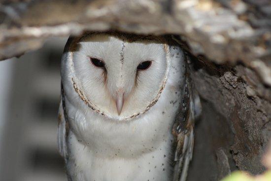Palm Cove, Australia: Birds of prey enclosure