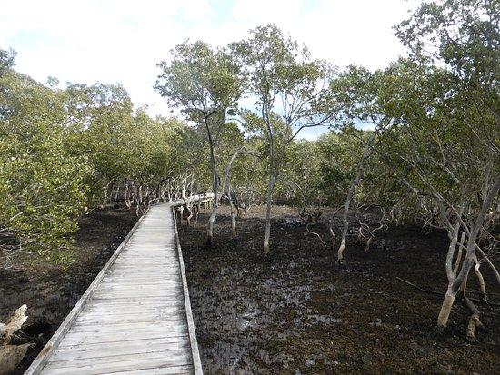 Хаскиссон, Австралия: Mangrove boardwalk.