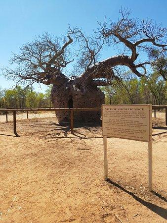 Derby, Australia: Boab prison tree