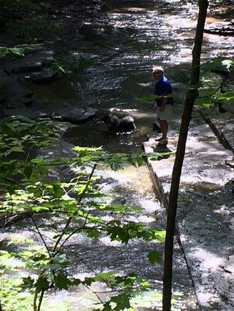 Chestnut Ridge Park : Dog always has a drink by the bridge!