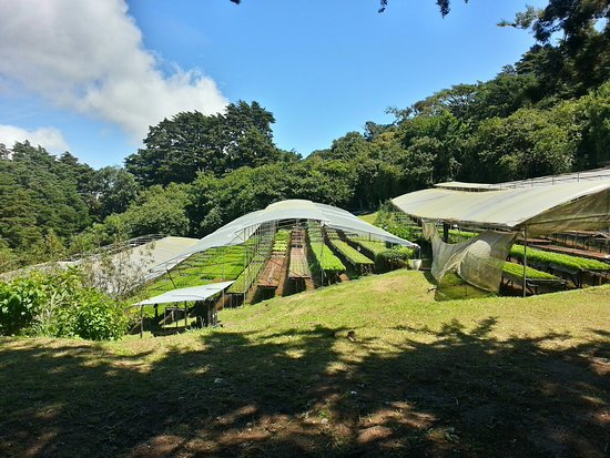 Cerro Plano, Коста-Рика: 20160725_103521_HDR_large.jpg
