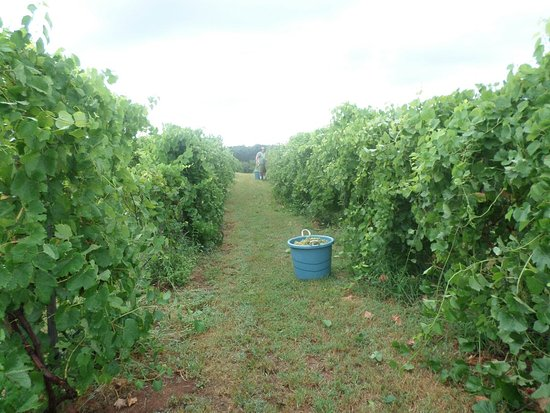 Anadarko, Oklahoma: The Range Vineyard and Winery