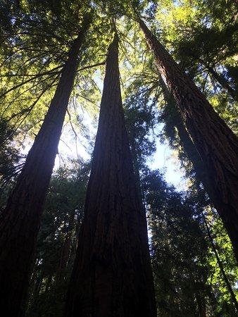 Mill Valley, CA: photo0.jpg