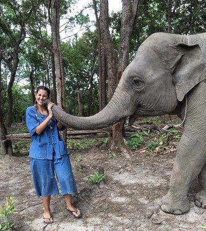 Chiang Mai Elephant Tour Tripadvisor