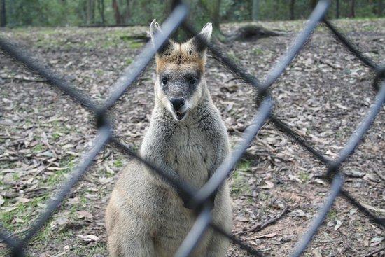 นิวคาสเซิล, ออสเตรเลีย: You want to take more photos?