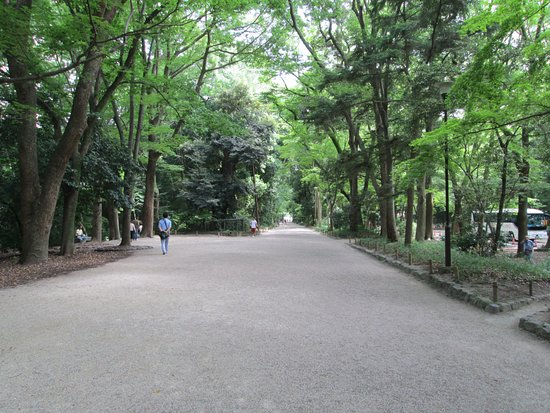 Shimogamo Jinja: The shrine is surrounded by a nice and quiet forest.