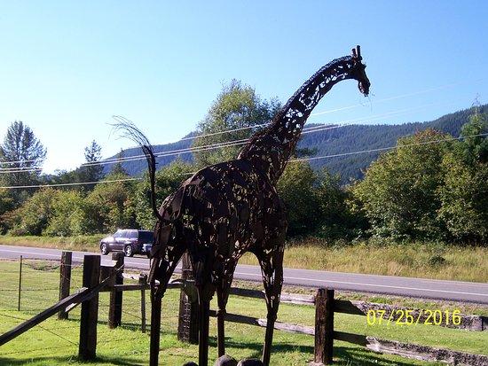 Ashford, WA: Giraffe