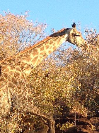 Waterberg, Sudáfrica: photo4.jpg
