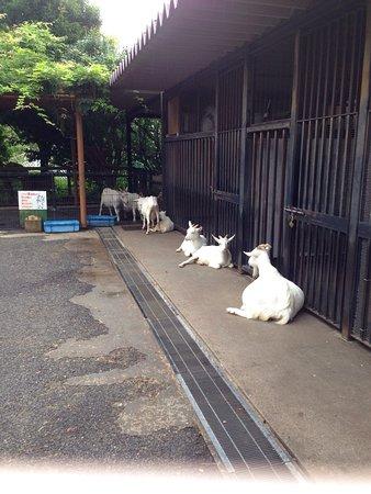 Arakawa, Japonia: photo2.jpg
