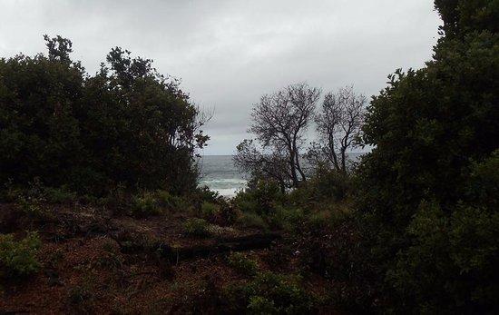 Peregian Beach, Australië: beach track