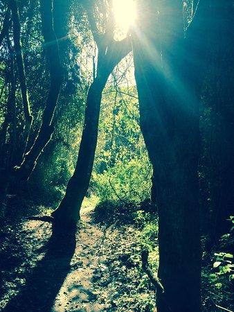 Wilderness, Zuid-Afrika: photo0.jpg