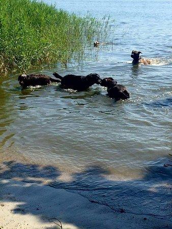 Dormelletto, Italia: Spiaggia per cani