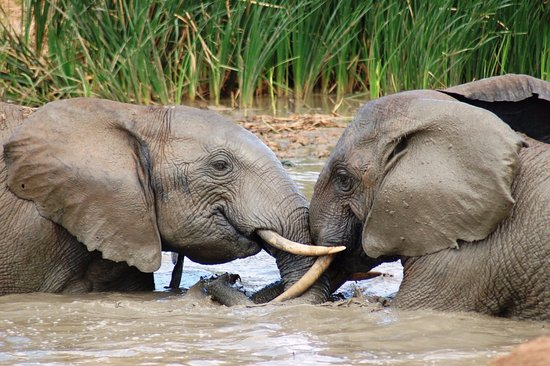 Addo Elephant National Park, Afrika Selatan: Two young bull elephants playing in the water