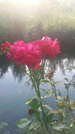 Trevi, Italia: Ristorante Zenzero