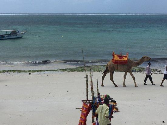 Nyali Beach: photo4.jpg