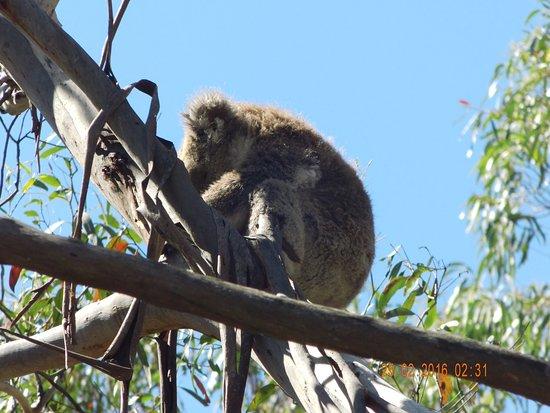 Cowes, Australia: Nur 2 Meter weg