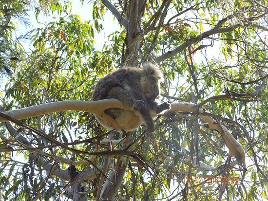 Cowes, Αυστραλία: Ruhe, ich schlafe