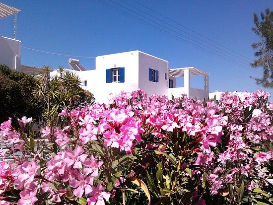 Logaras, Grécia: Nicos studios