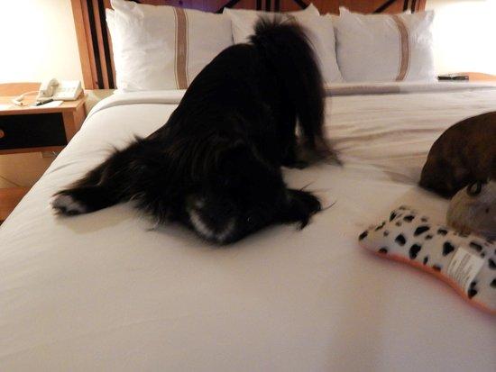 Foto Crockett Hotel