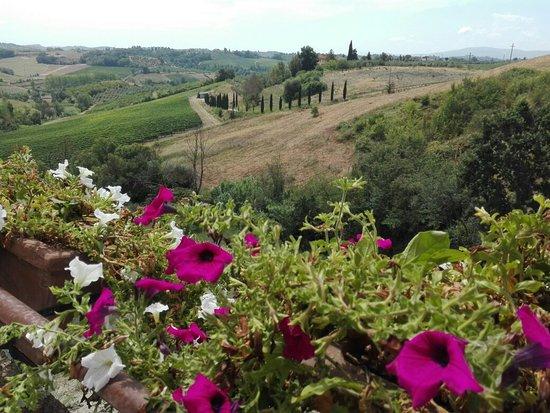 Montespertoli, Italy: IMG_20160725_122950_large.jpg