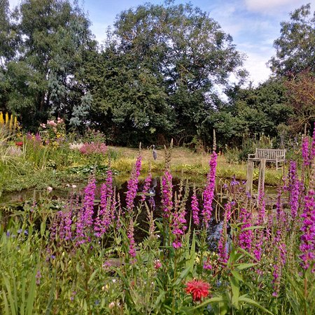 Newark-on-Trent, UK: The beautiful pond at Norwell gardens and nursery