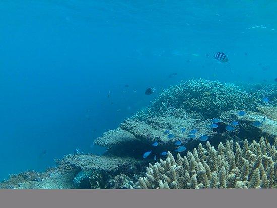 Mission Beach, Australia: Snorkelers Heaven