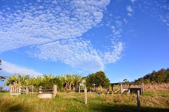Mororo, Australie : goat pen and fruit orchard