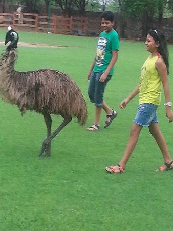 Sohna, Indien: Emu in India