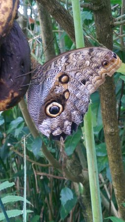 Lasswade, UK: Butterfly and Insect World