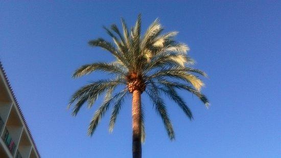 Costa Blanca, İspanya: looking up by the pool