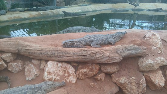 Pierrelatte, Frankrig: Des dizaines de crocodiles