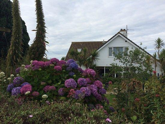 The Mustard Tree: Jardin luxuriant et très bien entretenu