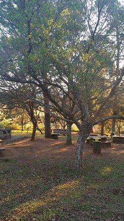 Sabie, Sør-Afrika: picnic tables amongst the trees