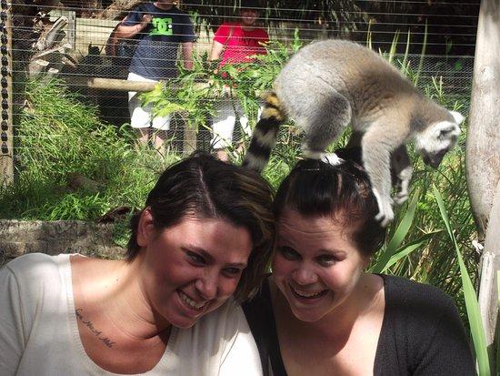 Oudtshoorn, Sudáfrica: Meeting the Lemurs