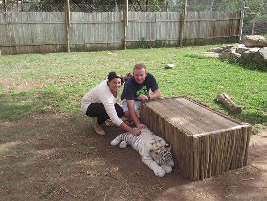 Oudtshoorn, Sudáfrica: The baby Tiger