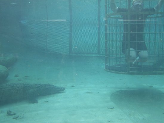 Oudtshoorn, Sudáfrica: Underneath the water with the Croc
