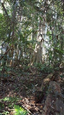 Mount Tamborine, Australia: 20160725_123251_large.jpg