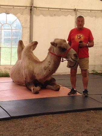 Halesworth, UK: The Camel Talk
