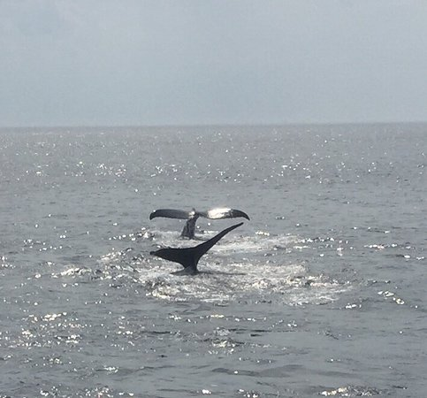 Cape Ann Whale Watch: photo0.jpg