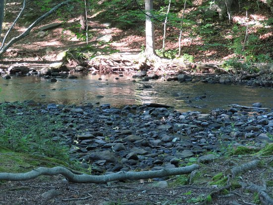 Fairfield, CT: One of the stream beds