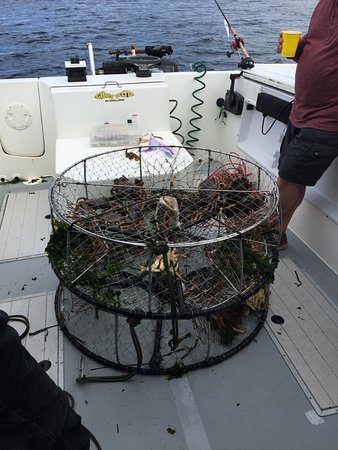 Campbell River, Canada: Dungeness Crab