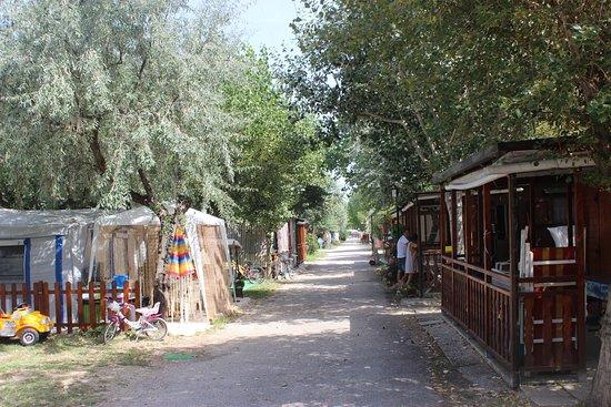 Falconara Marittima, Italia: Viale prinicipale del campeggio