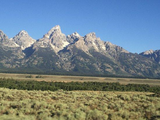 Wild Things of Wyoming: photo8.jpg
