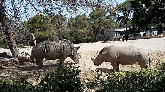 Parc Zoologique Henri de Lunaret: Witte neushoorn
