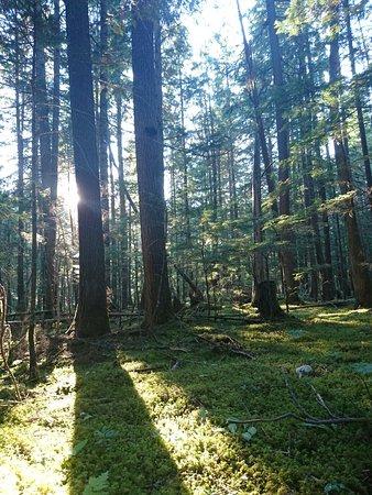 Lumby, แคนาดา: Beautiful Mabel Lake ⛺ 😍